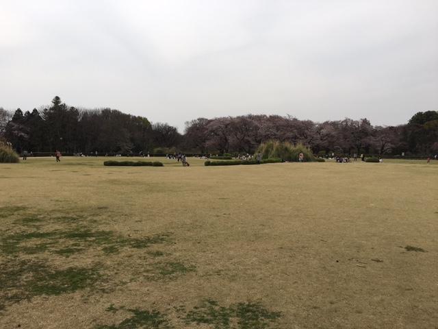 神代植物公園6