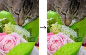 catandrose