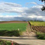 美瑛町パッチワークの路、ケンとメリーの木、セブンスターの木、マイルドセブンの丘