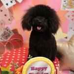 犬の理想のヘアスタイル