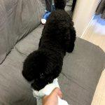 愛犬が大好きなタオル遊び