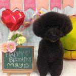 愛犬の誕生日写真