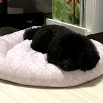 犬用のサマーベッド