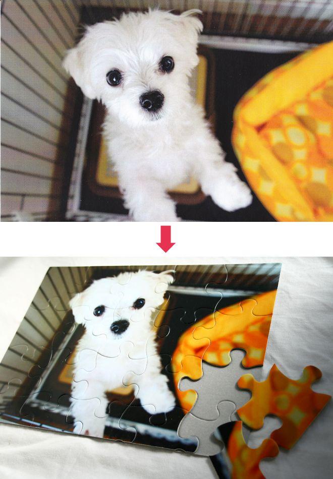 ペットの写真をパズルに